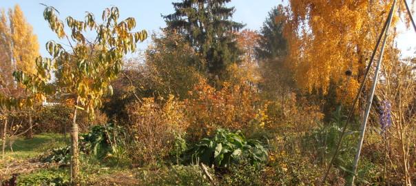 Indian summer im Waldgarten-Bereich des ForstFeldGartens