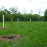 erste Pflanzungen : Mispeln, Esskastanien, Walnuss, Mandel...