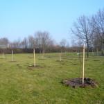 Nach der 2. Pflanzung (Dez. 2010)