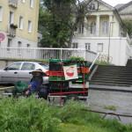 Jungpflanzentransport mit KlimaKostMobil