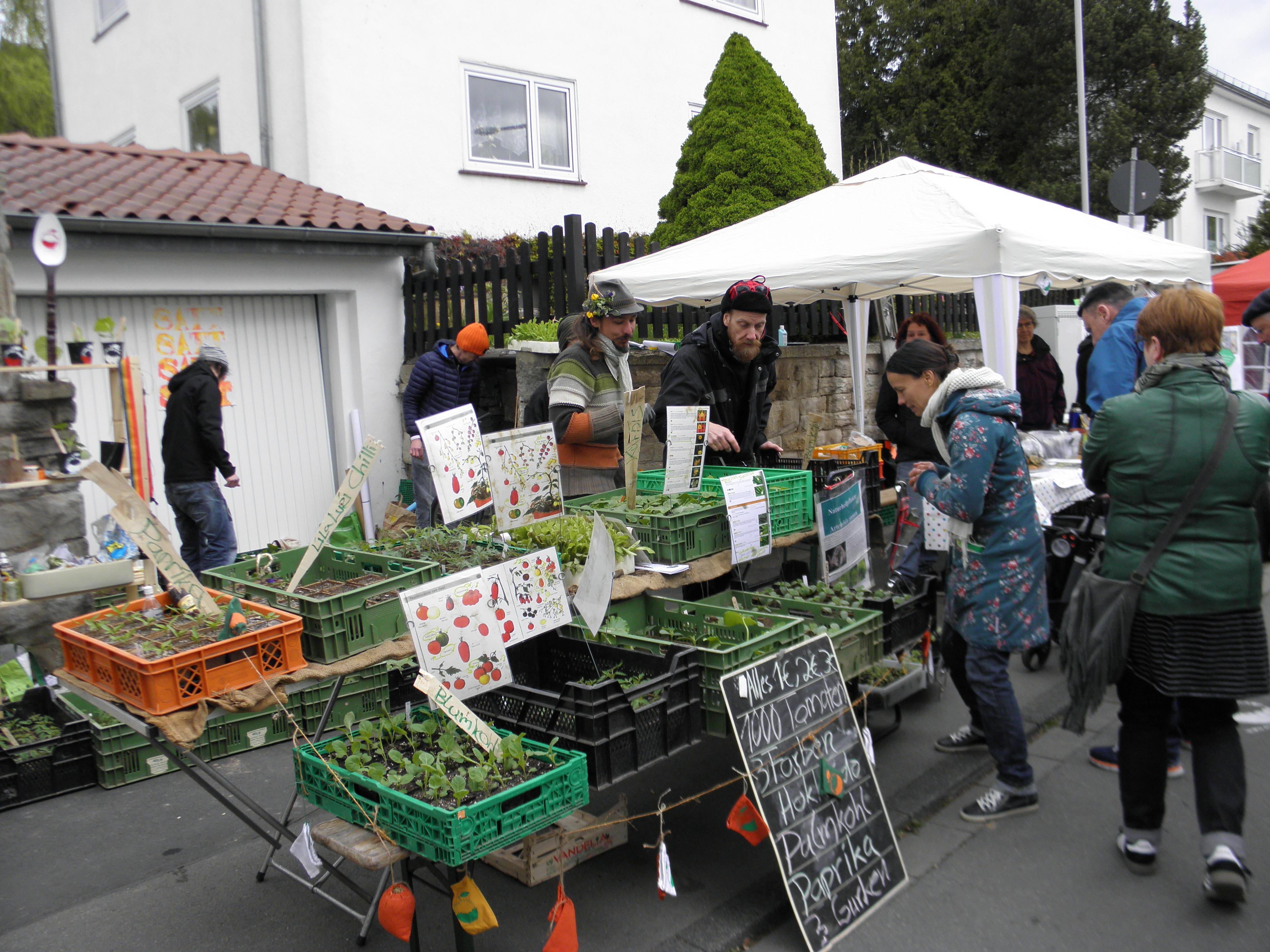 Jungpflanzen aus Essbare Stadt-Produktion