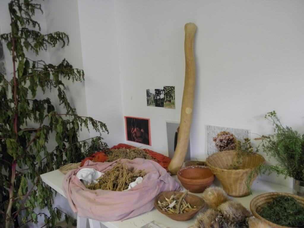 Herkiuleskeule, Quinoasaatgut
