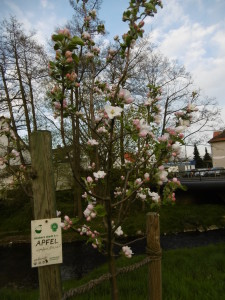 Frühling in Bettenhausen