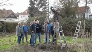Obstbaum-Schnittkurs März 2017-2