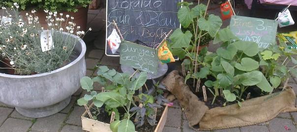 Junges Gemüse-Verkauf2