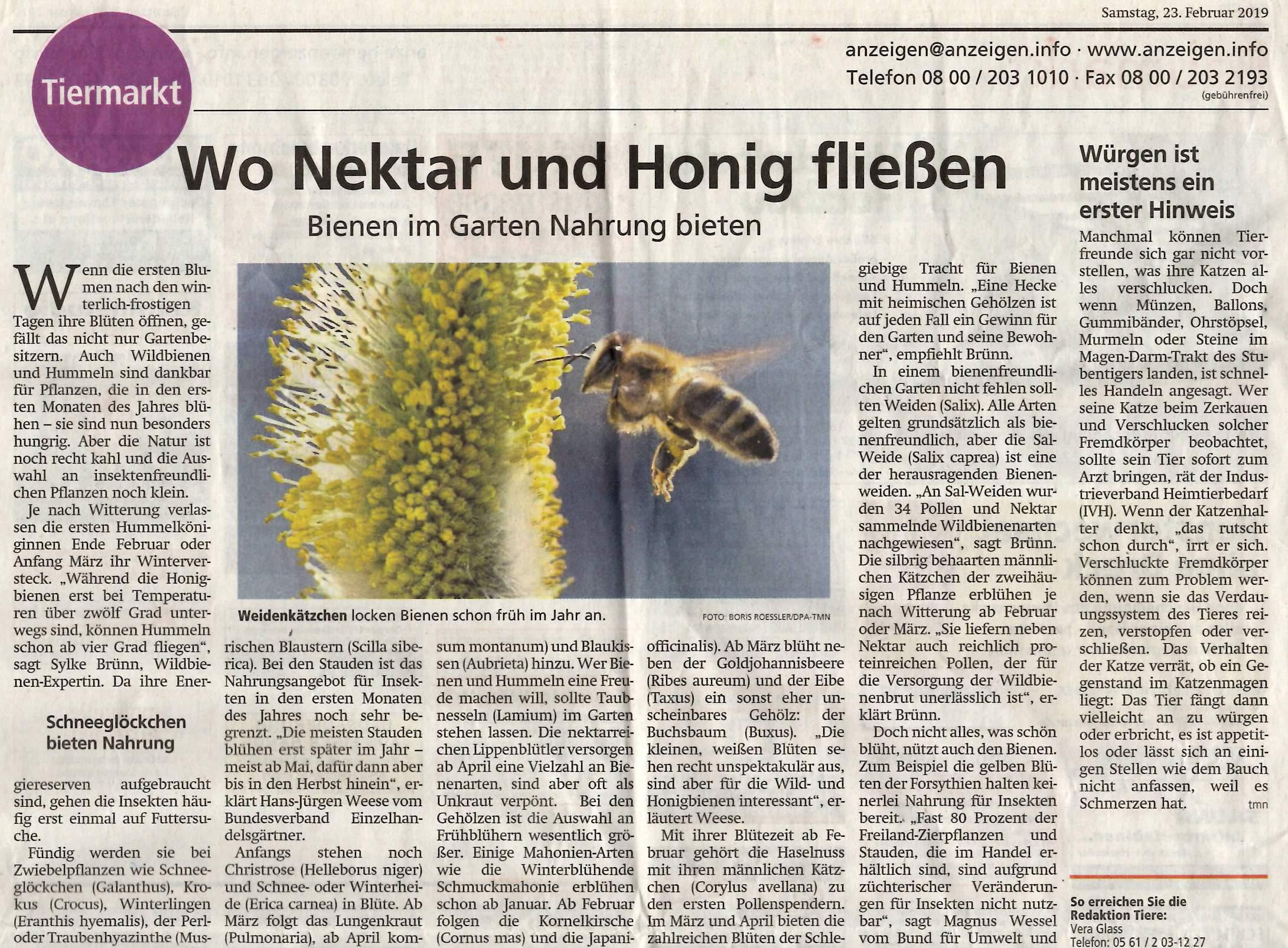 HNA_Artikel_Bienen_23.02.19