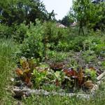 Projektparzelle im Waldgarten