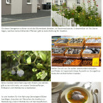 Fotostory-Wildblumenkampagne2020