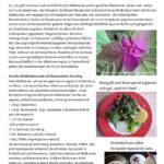 KlimaKüche-Rezept_22.6.2020